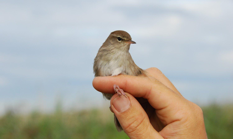 Comment devenir bagueur d 39 oiseaux - Comment effrayer les oiseaux ...